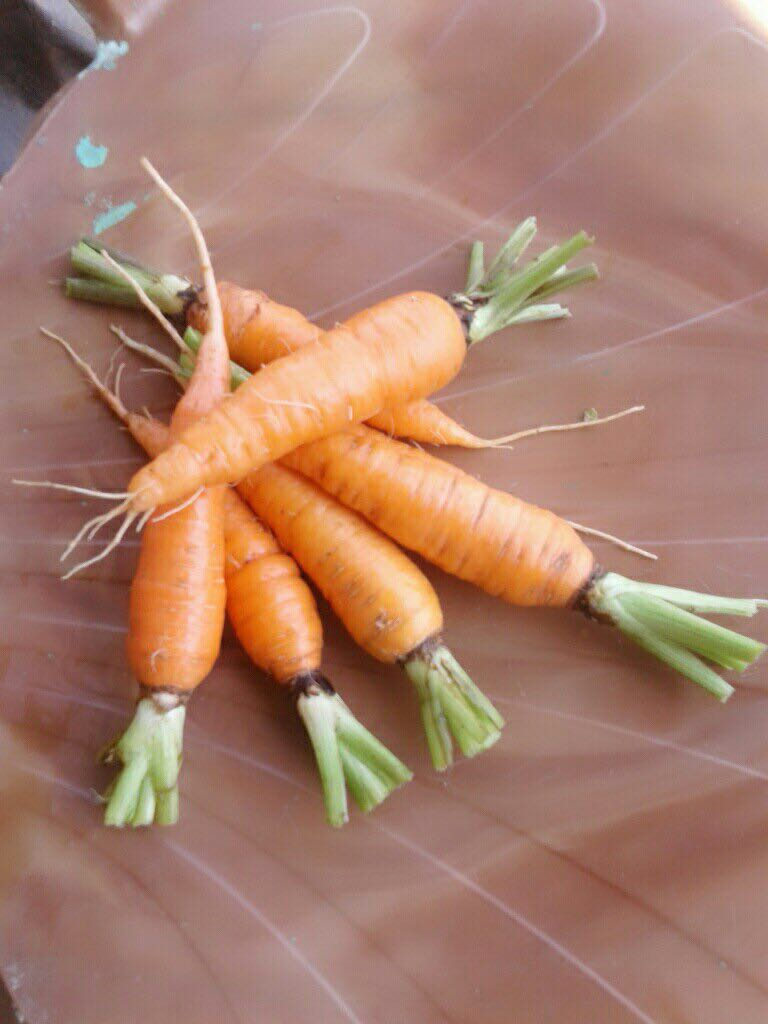 Fresh Certified Organic Carrot, 250g Pack