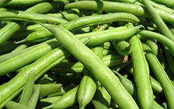 Fresh Certified Organic Green Beans, 250g Pack