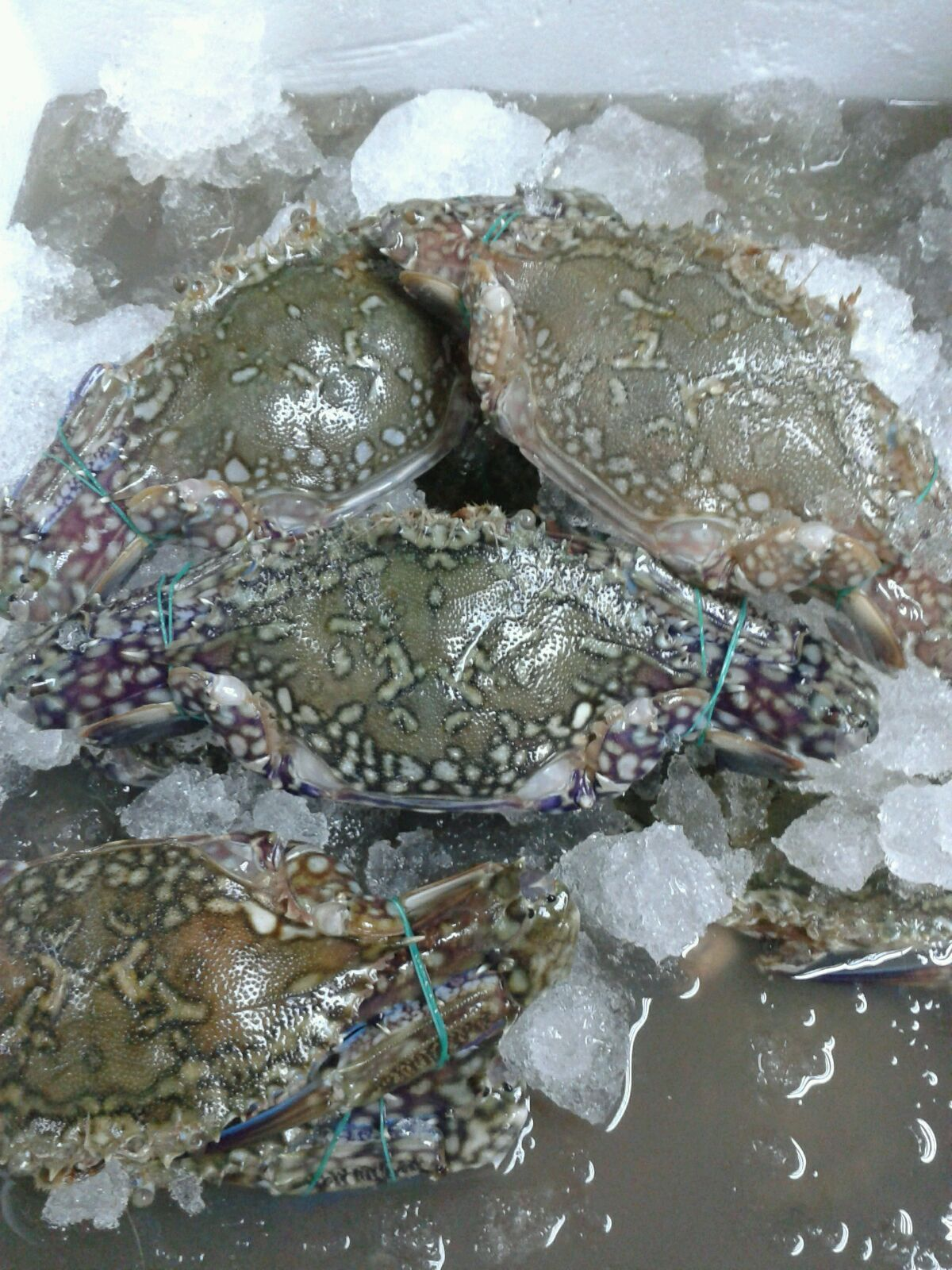 Frozen Crab Whole, 250g